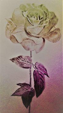 Blüte, Blätter, Rose, Stängel