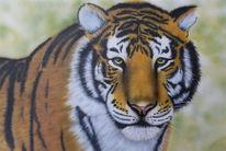 Airbrush, Tiger, Tierportrait, Malerei