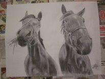 Schwarz weiß, Bleistiftzeichnung, Tiere, Lutz lila