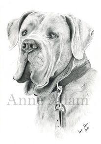 Saupacker, Tierportrait, Bleistiftzeichnung, Dogge