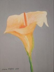 Calla, Orange, Blumen, Malerei