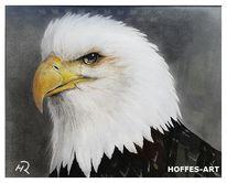 Portrait, Bleistiftzeichnung, Weißkopfseeadler, Zeichnung