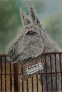 Donkey, Esel, Tiere, Zeichnungen