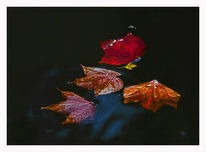 Blätter, Teich, Rot, Herbst
