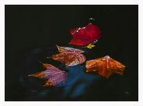 Herbst, Gelb, Blätter, Bunt