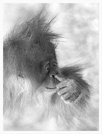 Orang utan, Affe, Zeichnung, Stille