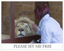 Löwe, Malen, Gefangenschaft, Gefängnis