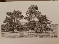 Pflanzen, Natur, Landschaft, Zeichnung