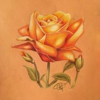 Rose, Pflanzen, Blumen, Illustrationen