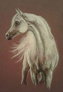 Pastellmalerei, Weiß, Pferde, Zeichnungen