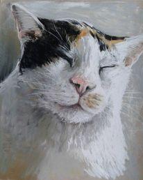 Amy, Katze, Pastellmalerei, Zeichnungen