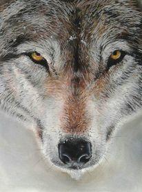 Wolf, Pastellmalerei, Winter, Tiere