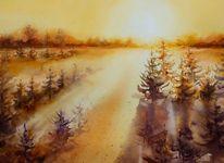 Licht, Landschaft, Eco line, Öko