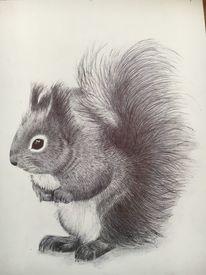 Eichhörnchen, Rabe, Katze, Kugelschreiber zeichnung