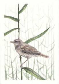 Aquarellmalerei, Natur, Pflanzen, Vogel