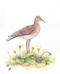 Vogel, Buntstiftzeichnung, Natur, Pflanzen