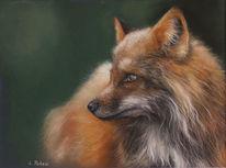 Reineke, Orange, Fuchs, Tiere