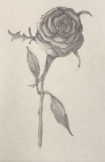 Schwarz weiß, Rose, Bleistiftzeichnung, Zeichnung
