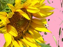 Gelb, Rosa, Sonnenblumen, Digitale kunst