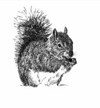Eichhörnchen, Winter, Zeichnungen