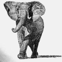 Afrika, Elefant, Zeichnungen,