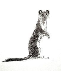 Illustration, Tiere, Zeichnungen,