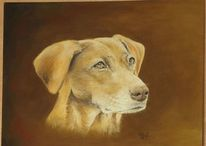 Hund, Vizsla, Portrait, Zeichnungen