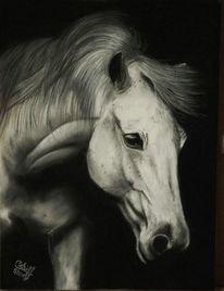 Pferdeportrait, Schwarz, Schimmel, Tierportrait