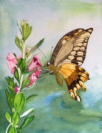 Schmetterling, Blüte, Nektar, Aquarell