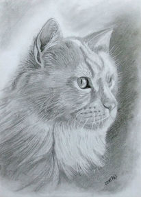 Katzenaugen, Katze, Grafit, Kater