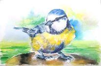 Tiere, Natur, Blau, Vogel