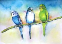 Wellensittiche, Aquarellmalerei, Vogel, Blau