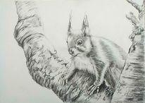 Zeichnung, Bleistiftzeichnung, Eichhörnchen, Tiere