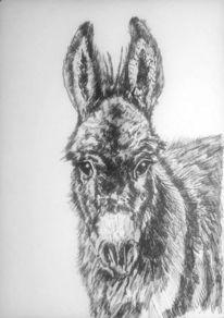 Esel, Weiß, Tiere, Portrait