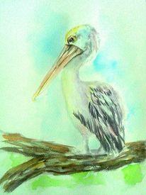Weiß, Schön, Pelikan, Natur