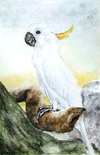 Kakadu, Tiere, Tierportrait, Vogel