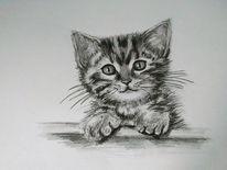 Zeichnung, Schwarz, Katze, Bleistiftzeichnung