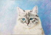 Tiere, Acrylmalerei, Katze, Tierportrait