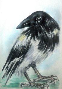 Vogel, Tierportrait, Schnabel, Vogelportrait