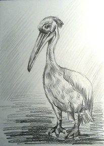 Tierportrait, Pelikan, Schwarz, Zeichnung