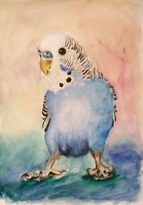 Wellensittiche, Aquarellmalerei, Vogel, Aquarell