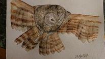 Aquarellmalerei, Fliegende eule, Profil, Aquarell