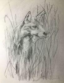 Zeichnen, Tiere, Fuchs, Bleistiftzeichnung