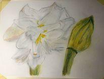 Amaryllis, Pastellmalerei, 40 x30, Mischtechnik