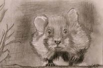 Hamster, Bleistiftzeichnung, Tiere, Zeichnungen