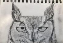 Bleistiftzeichnung, Skizze, Kauz, Zeichnungen