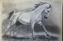 Bleistiftzeichnung, Pferde, Schimmel, Zeichnungen