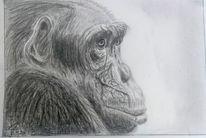 Traurig, Schimpanse, Affe, Zeichnungen