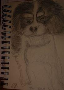 Hund, Freund, Tico, Zeichnungen
