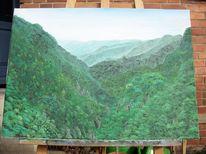 Landschaft, Urwald, Madeira, Wald